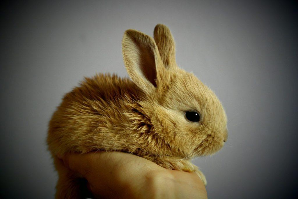 bunny care in 6 steps