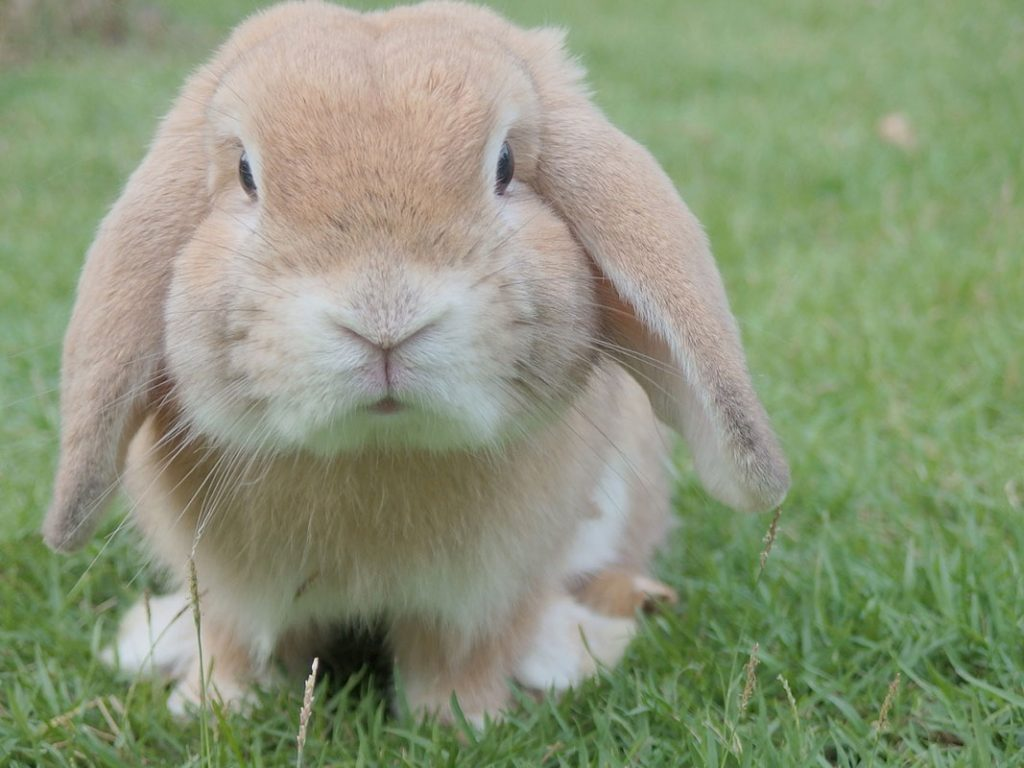 bunny at the end of its lifespan